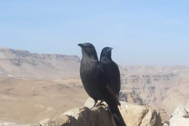 Masada from Raizy